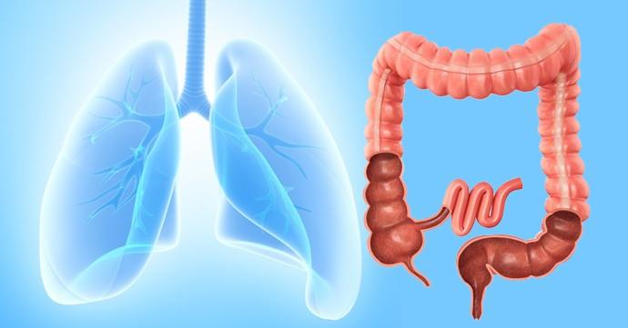 Meridián pľúc a hrubého čreva.